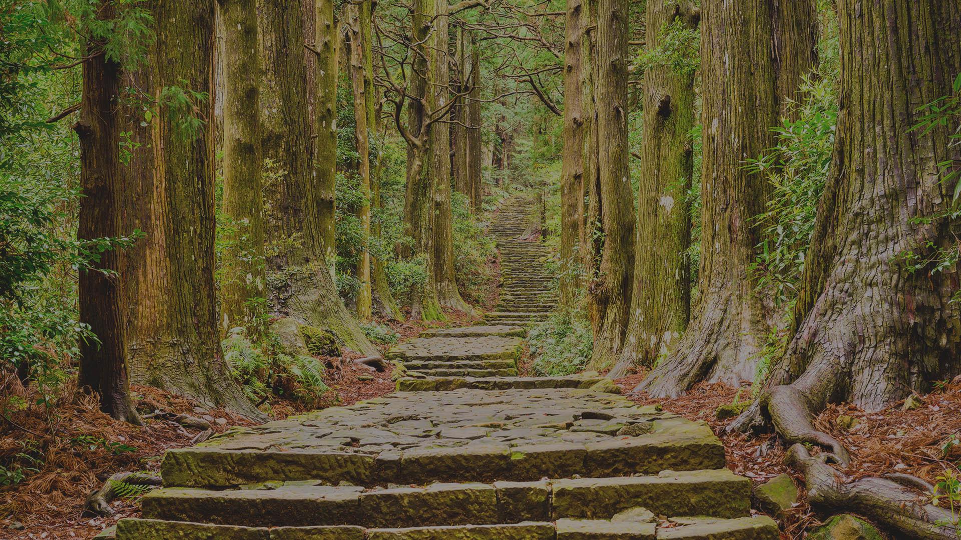 bosco di conifere per produzione pellet